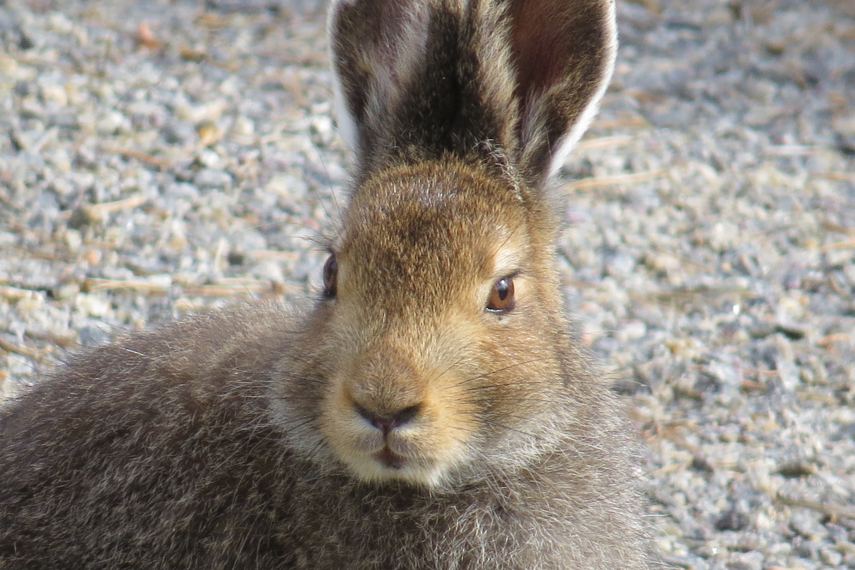 Animals In Southern Finland Juva Mikkeli Region And