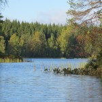 Nature in Finland and the Lakes route