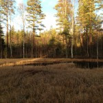 Nature in Finland and the Lakes forest pond