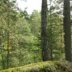 Nature in Finland and the Lakes forest